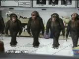 horon çeken maymunlar : ) ) ) )