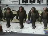 horon tepen maymunlar !
