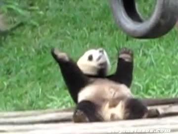 oryantal yapan panda