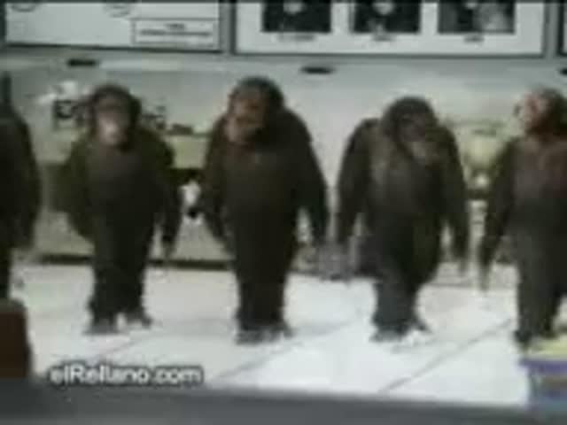 maymunlar horon.