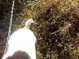 Mayanın Kuş Arama Eğitimi