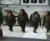 maymunlar horon