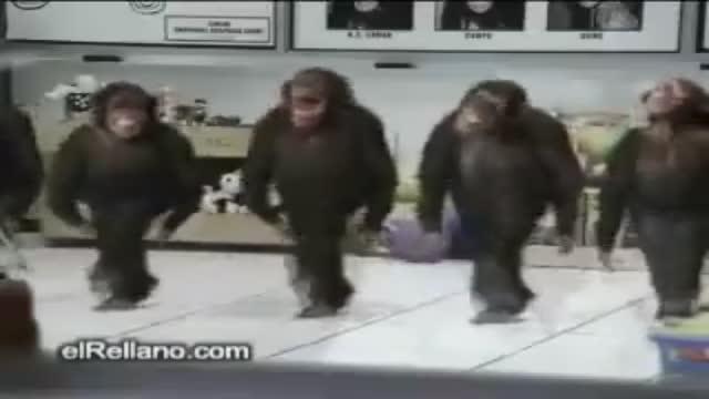 maymunlar horon teperse