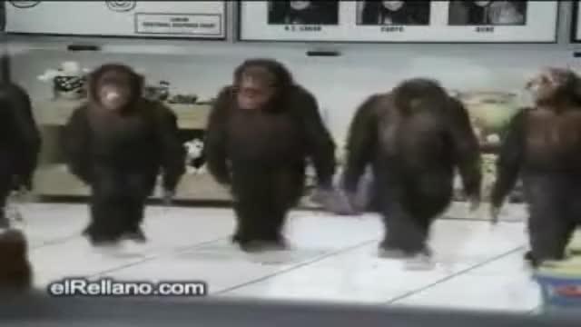 halay ceken maymunlar izleeee ! ! ! ! ! ! ! !