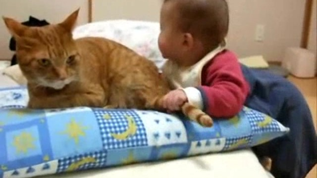 bebek kedinin kuyruğunu ısırıyor bebek kedinin kuyruğunu ağzına alıyor