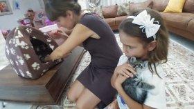Minik Kediciklerimiz Pamuk ve Tarçın için yeni ev aldık , eğlenceli çocuk videosu