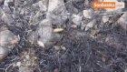 Kütahya'daki Orman Yangınında Soğutma Çalışmaları Devam Ediyor
