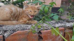 Yavru Kediler , Yavru Kediler Nasıl Beslenir , Yavru Kediler Nasıl Eğitilir , Yavru Kedilere Nasıl Bakı