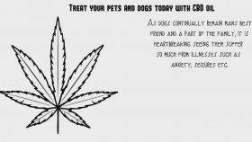 What the benefits of CBD oil for your dog ?