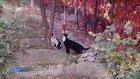 Çok Komik Hayvan Videoları 2017 İlginç ve Komik