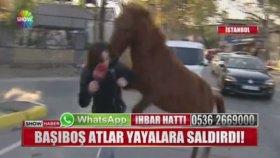 At Haberi Yapmaya Giden Muhabire Atın Saldırması