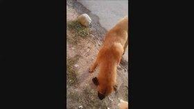 Sokak Köpekleri İlginç Videolar Türkiye