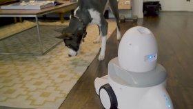 App - Enabled Funpaw Playbot Q Pet Camera & Pet Feeder