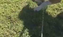 Fıskiyeden Su İçmeye Çalışan Köpek