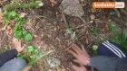 PKK'lı Terörist Yer Gösterdi , C4 ve Zırh Delici Patlayıcılar Ele Geçirildi