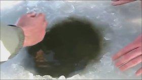 Buzun Altından Yakaladığı Balık Çok Büyük Merak Edenler İçin İyi Seyirler