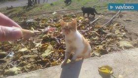 Canlı kedi miyavlaması kedi sesleri kedi miyavlaması kedi sesleri AC kediler miyavlaması kedi sesi