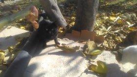 Kedi sesleri kedi miyavlaması kedi sesleri videoları