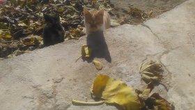 ( Yeni ) kedi sesleri kedi miyavlaması kedi miyavlaması kedi sesleri videoları