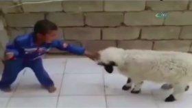 Çocuk ve Koyun kavgası - Amerikan Dublaj