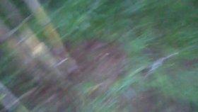 Kargı kamışı faydaları kargı kamışı nasıl çoğaltılır tarımı ekimi nasıl yapılır hakkında bilgiler