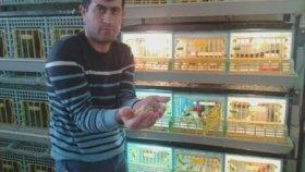 Bıldırcın Üretimi Ankara