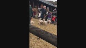 Güney Melek Çiftligi South Angel Farm Park # İlginç Videolar Britain