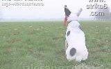 minik köpek