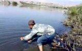 balık avlama cizrede dicle nehrinde 55 kg lık