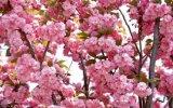 Дизайн.  Бледно-розовый Подписать: Magic Roxy Можно бабочек добавить и т.д.