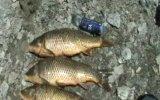 Altınkaya Baraj Gölünde Tutulan Balıklar