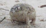 Böyle Kurbağa Gördünüz Mü