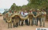 Dünyanin En Büyük Hayvanlari