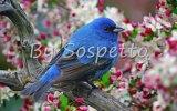 Çoçuk Şarkıları - Mini Mini Bir Kuş