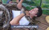 Filipinler'de Dev Pitonlarla SPA Masajı Yapılıyor