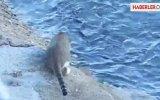 İstanbul Boğazında Balık Avlayan Kedi