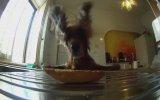 Sevimli Köpeğin Tatlı Hırsızlığı