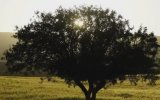 Sabahat Akkiraz - Canda Cananım Ali