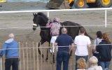 Çılgına Dönen Yarış Atı