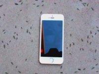 Karıncaların iPhone'a Verdiği Esrarengiz Tepki