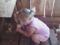 Tavuğun Korkulu Rüyası Minik Kız