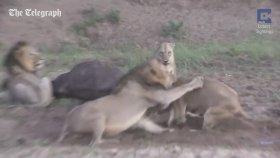 Avı Paylaşamayan Adanalı Aslanların Sokak Kavgası