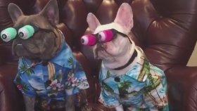 Patlakgöz Köpekler Komik Olmuşlar
