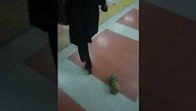 Ankara'da Ananas Gezdiren Kadın