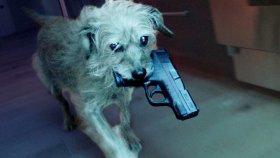 Köpek Temalı John Wick Parodisi : John Vuruldu Diye Ortalığı Toz Duman Eden Dog Wick