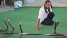 Kobra Yılanlarıyla Gösteri Yapan Çılgın Adam