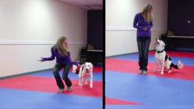 Dostu ile Muhteşem Dans Gösterisi Yapan Köpek