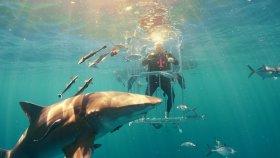 Köpek Balıkları İle Dünyanın En Tehlikeli Galaxy S8 Kutu Açılışı !
