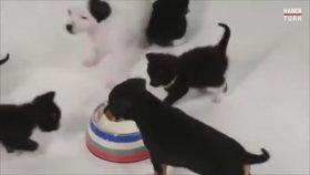 Birbirleriyle İlk Kez Karşılaşan Kedi ve Köpek Yavruları