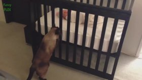 İlk Kez Bebek Gören Meraklı Kediler
